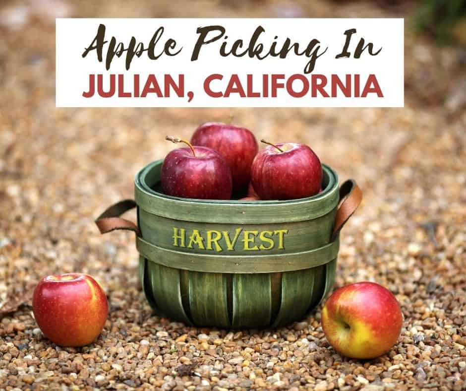 Where to go apple picking in Julian, California