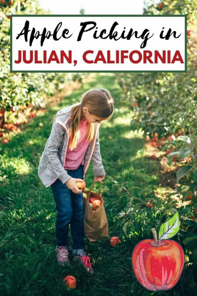 Whether you're looking for a fun outing for your family, an educational field trip, or the best apples to make a delicious pie, here's is a list of the best apple farms to go apple picking in Julian, California.