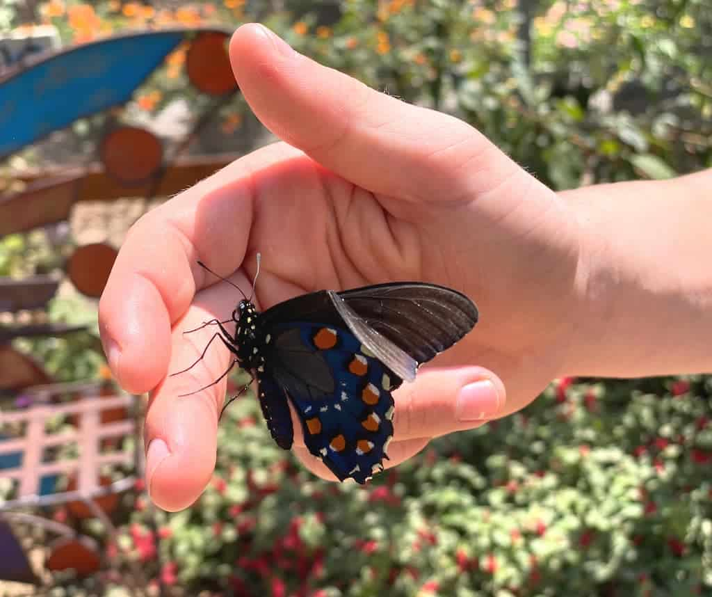 Boy holding a butterfly at Butterfly Farms in Encinitas