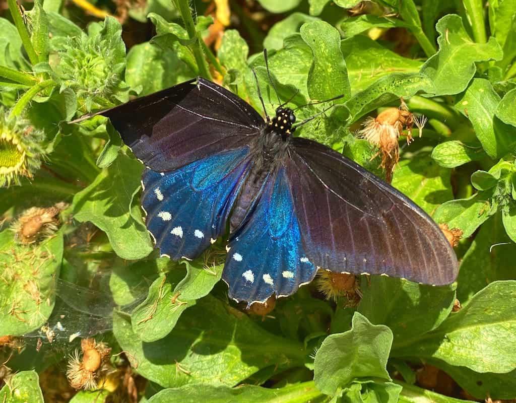 Butterfly Farms in San Diego