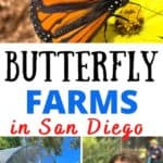 Butterfly Farms, a hidden gem in San Diego, was established in 2012 out of concern with the decline of native butterflies and other native pollinators in Southern California. The focus of the farm is on education, conservation and research of these pollinators. They also offer school field trips.