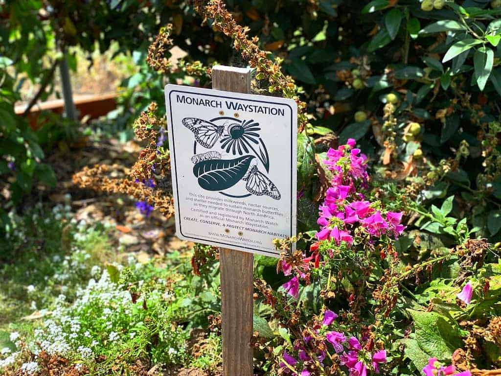Sign about monarch butterflies in San Diego