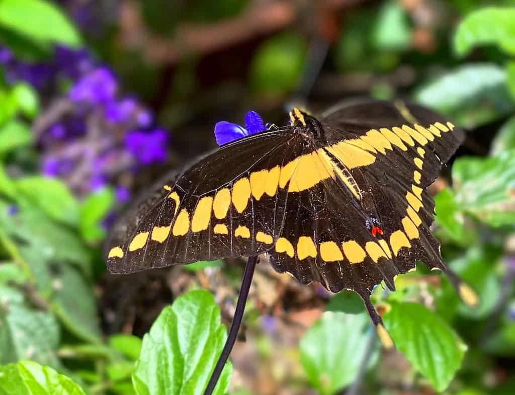 Butterfly Farms in Encinitas