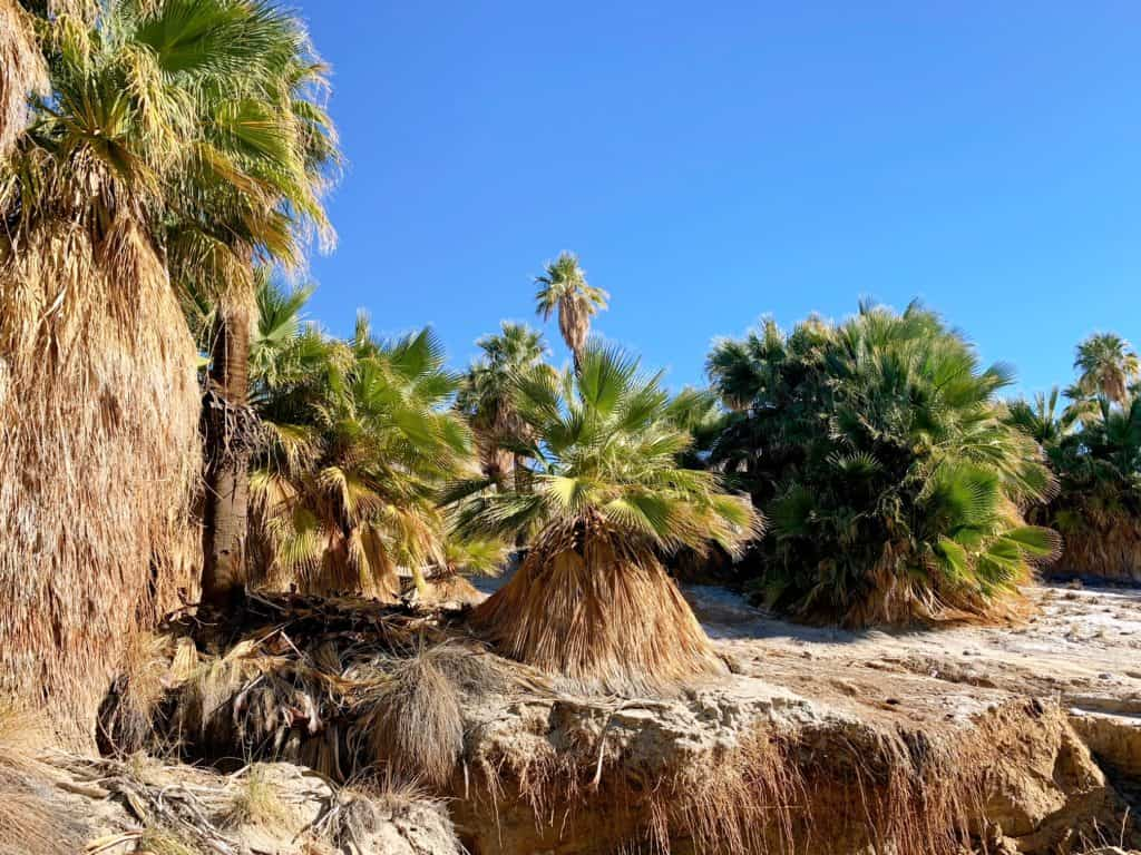 Jeep Tours in the Palm Springs Desert