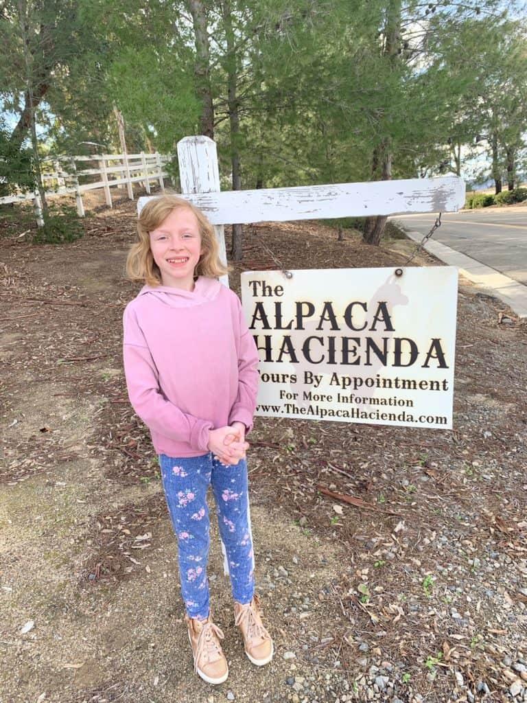 Alpaca Farm in The Inland Empire