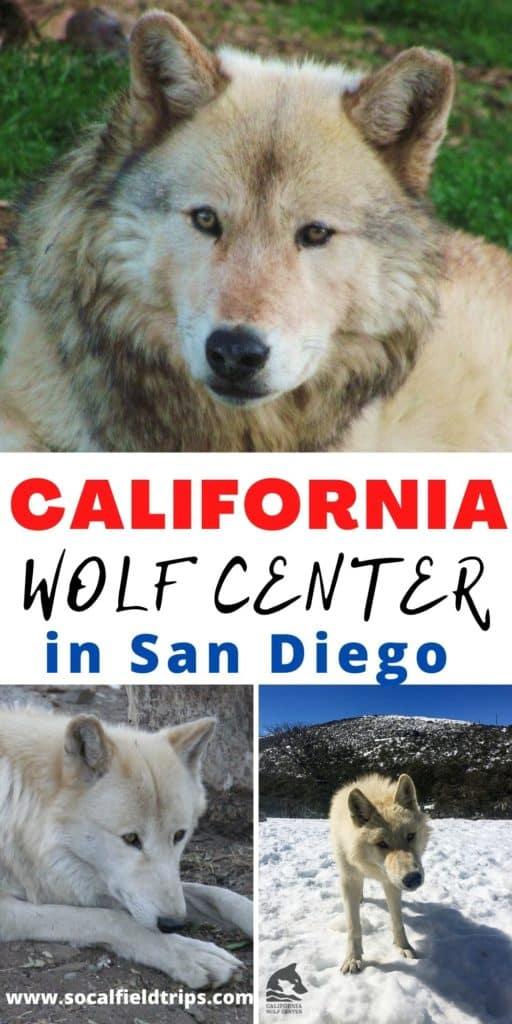 Visit the California Wolf Center in Julian California