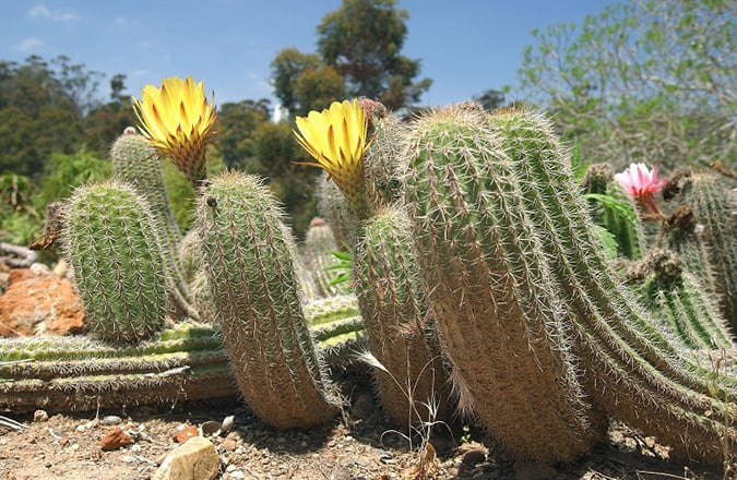 Old Cactus Garden San Diego