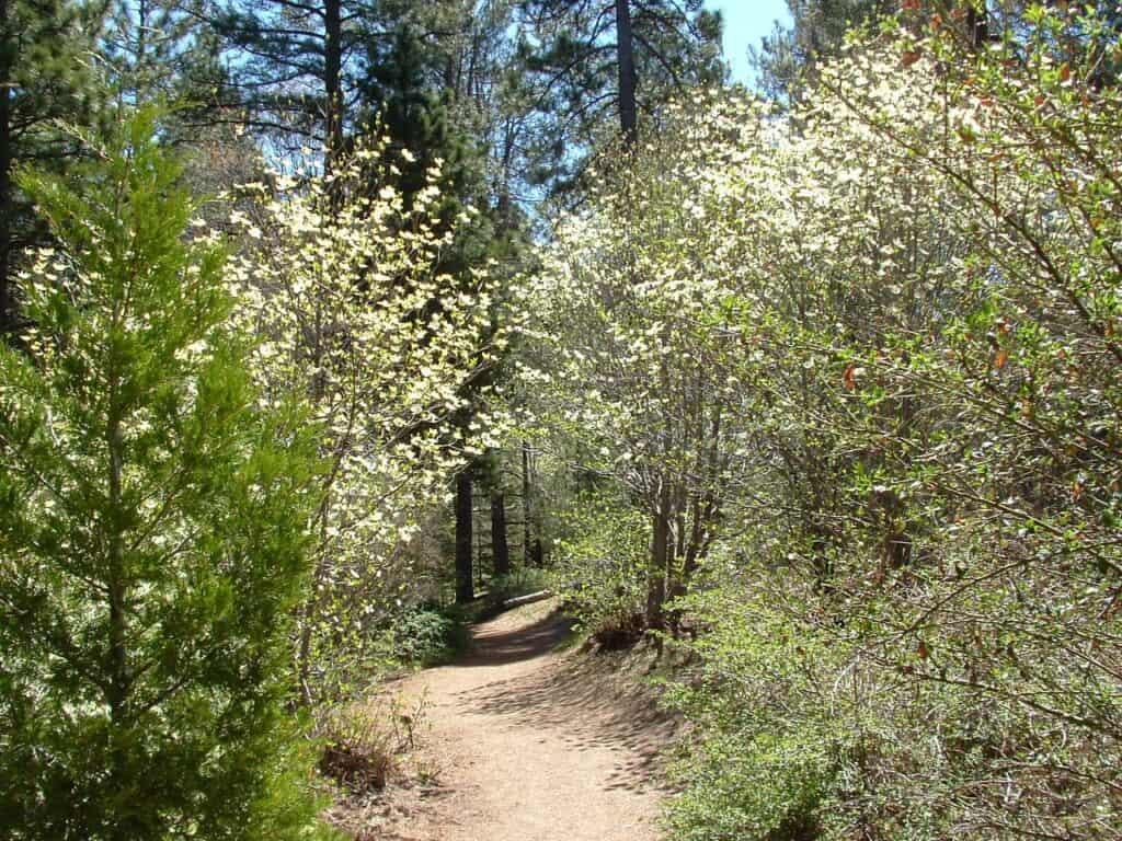 Botanical Garden San Bernardino