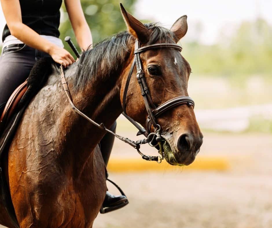 Where to go horseback riding in Orange County