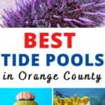 While Orange County is home to beautiful beaches, tide pools add a unique experience when visiting. Here are a ten tide pools we recommend visiting.