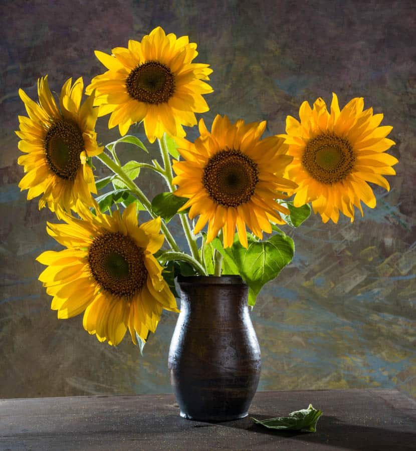 Sunflower Field in California