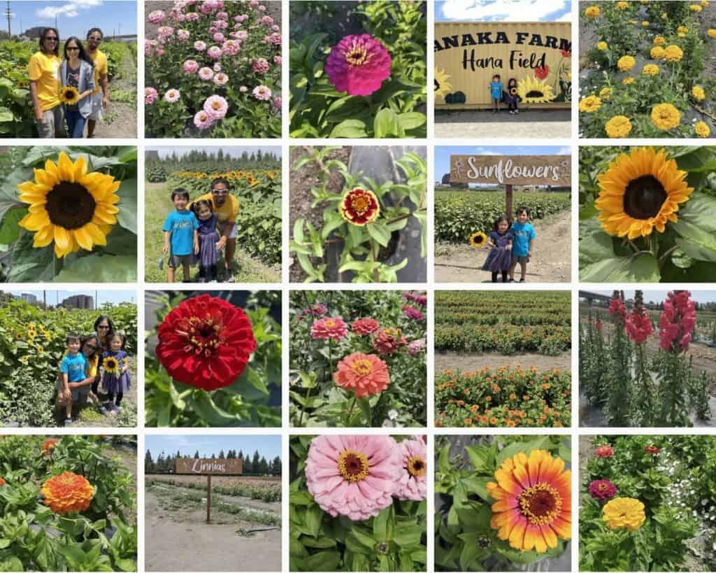 Hana Field Tanaka Farms